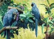 Hyacinth Macaw Framed Prints - Heavenly - Print Framed Print by Carole Niclasse