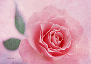 Mother Gift Metal Prints - Heavenly Rose Metal Print by Zeana Romanovna