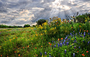 Bluebonnet Wildflowers Posters - Heavens Light - Fine Art by Lynn Bauer Poster by Lynn Bauer