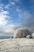 Wintry Photo Prints - Heavy Frost Print by Anne Gilbert
