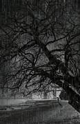 Heavy Rain Print by Svetlana Sewell