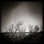 Iphone Photos - Hedgerow by David Bowman
