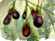 Vine Paintings - Heirloom Eggplant by Sandra Stone