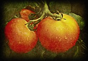 Earthy Water Prints - Heirloom Tomatoes  Print by Chris Berry