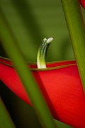 Bonita Hensley - Heliconia Partial