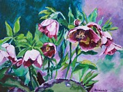 Jan Bennicoff - Hellebore Flowers