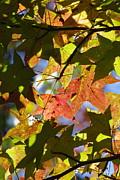 Tannis  Baldwin - Hello Autumn