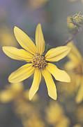 Hello Yellow Print by Faith Simbeck
