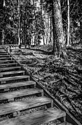 Wooden Stairs Prints - Helping Boards Print by Matti Ollikainen