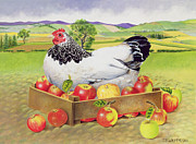 Yellow Apples Posters - Hen in a Box of Apples Poster by EB Watts