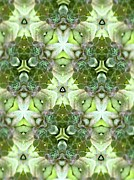 Hens And Chicks Photography Prints - Hens and Chicks Kaleidoscope Print by Diane McDougall