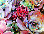 Gardening Photography Metal Prints - Hens and Chicks series - Copper Tarnish  Metal Print by Moon Stumpp