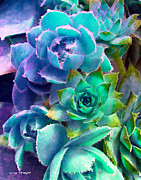 Flowers Photographs Digital Art Prints - Hens and Chicks series - Deck Blues Print by Moon Stumpp