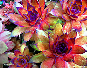 Watercolor Photos - Hens and Chicks series - Garden Brass by Moon Stumpp