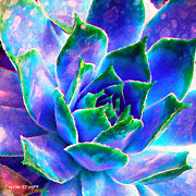Cacti Framed Prints - Hens and Chicks series - Touches of Blue  Framed Print by Moon Stumpp
