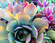 Watercolor Photos - Hens and Chicks series - Unfolding by Moon Stumpp