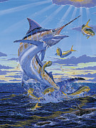 Striped Marlin Framed Prints - Her Majesty Off0028 Framed Print by Carey Chen