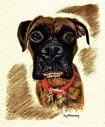 Boxer Dog Drawings Framed Prints - Her Name Is Bonnie Framed Print by Joy Bradley                   DiNardo Designs