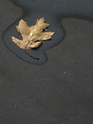 Guy Ricketts Photography Prints - Her Smallest Leaf Print by Guy Ricketts