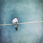 Bird On A Wire Posters - Herald Of Spring Poster by Priska Wettstein