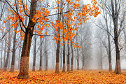Bulgaria Metal Prints - Heralds of Autumn Metal Print by Evgeni Dinev