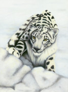 White Tiger Mixed Media - Hercules Snow Leopard by Jane Indigo Moore