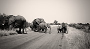 James  Wasdell - Herd of Elephant in...