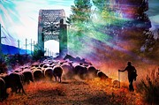 Amy G Taylor - Herding Sheep in Ketchum...