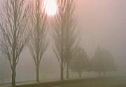 Steve Ohlsen - Here Come the Sun -  Winter Poplars in Fog 4