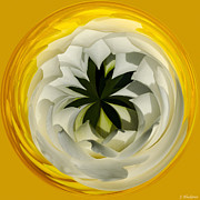 Blooming Digital Art - Here Comes The Sun by Jordan Blackstone