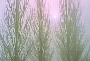 Steve Ohlsen - Here Comes the Sun - Winter Poplars in Fog 1