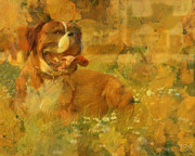 Canines Digital Art - Here Doggie by Barbara R MacPhail