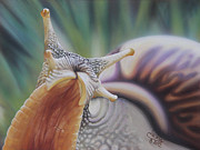 Snail Paintings - Here I am by Jackie Mestrom