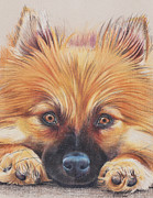 Puppies Drawings Framed Prints - Heres Looking at You Framed Print by Christine Dion