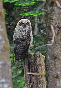 Owlet Photos - Heres Looking At You by Randy Hall