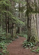 Old Growth Prints - Heritage Forest Print by Randy Hall