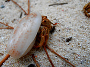 Kimberly Perry - Hermie the Crab