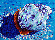 Caribbean Sea Paintings - Hermit Crab Study III by Paulene Edwards