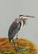 Bird Pastels Framed Prints - Heron Framed Print by Anastasiya Malakhova