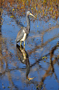 Reflection In Water Photo Prints - Heron and Reflection in Jekyll Islands Marsh Print by Bruce Gourley
