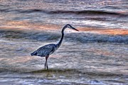 Beach Fence Digital Art Posters - Heron Closeup Fishing Poster by Michael Thomas