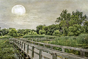 Jeff Swanson Metal Prints - Heron Haven Boardwalk Metal Print by Jeff Swanson