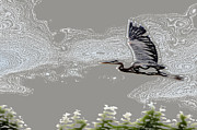 Great Birds Mixed Media Posters - Heron in Flight Poster by Kathleen Stephens
