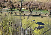 Wading Bird Posters - Heron in Pond Poster by Angie Vogel