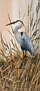 James Williamson Bird Prints Prints - Heron in Tall Grass Print by James Williamson