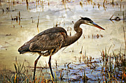 Heron On A Cloudy Day Print by Marty Koch