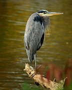 Dick Wood - Heron on Lake Logan