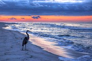 Michael Thomas Framed Prints - Heron on Mobile Beach Framed Print by Michael Thomas