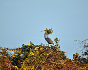 Gray Heron Photos - Heron Perch by Al Powell Photography USA