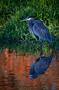 Dave Weth - Heron Reflection